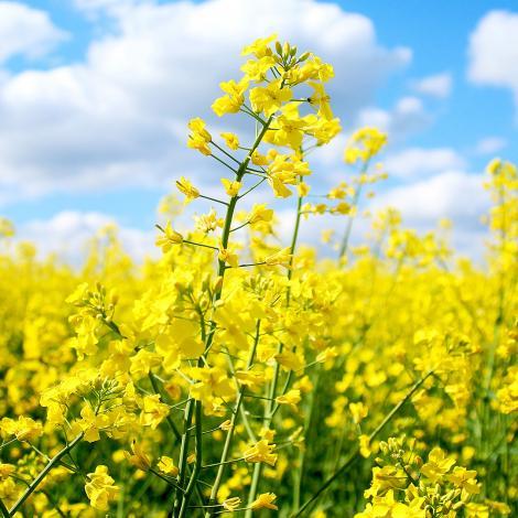 Notre biofioul nous permettant d'aller dans le sens de la transition écologique