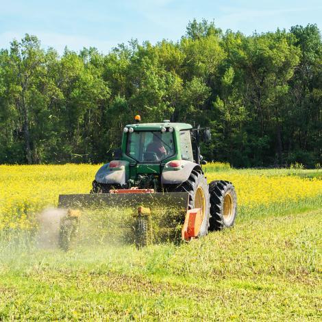 Le colza, composant notre biocombustible, est cultivé uniquement en France